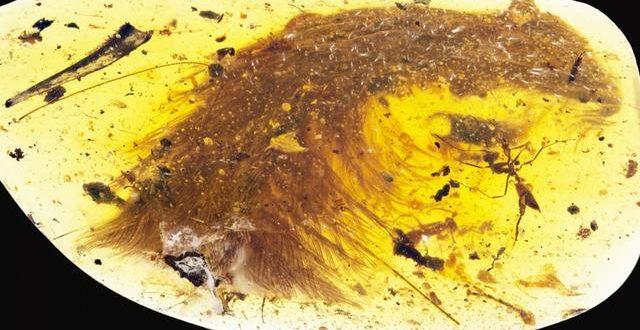 Scientists make breathtaking find encased in '99 million-year-old' amber