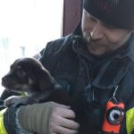 Fire In Burlington: Puppy rescued from burning motor home