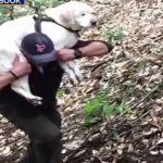 Blind Dog Rescued In Santa Cruz Mountains After a Week Missing
