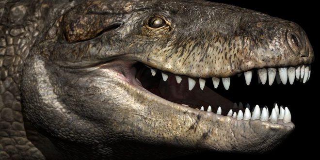 "An Enormous crocodile was ""24 feet long"" with teeth as sharp as a T-Rex's"