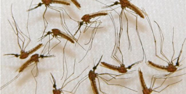 'Super malaria' spreading through SE Asia, scientists warn