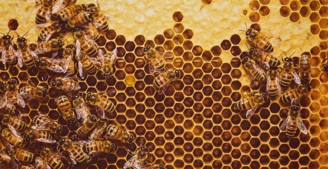 Pesticide traces found in 75 percent of world honey