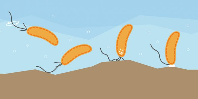 Scientists discover 'sense of touch' in bacteria