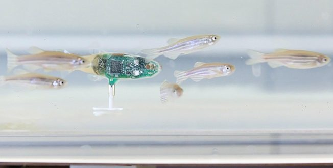 Researchers develop tiny 'robot' to spy on fish (Video)