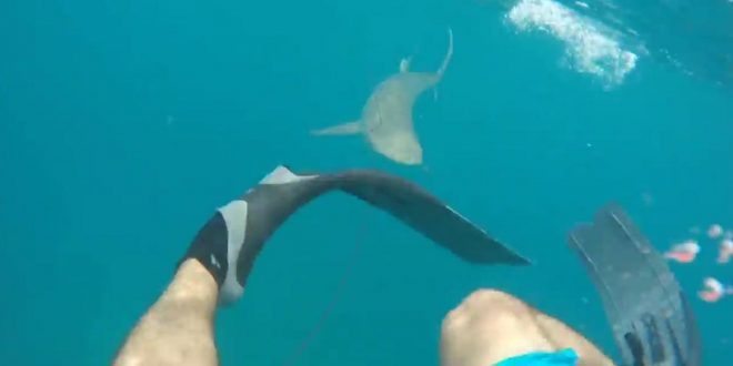 Man Attacked by Shark at Kukio Beach in Hawaii (Watch)