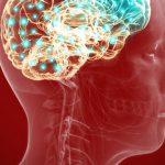 Stroke brain rats study: Transplanted reprogrammed skin cells