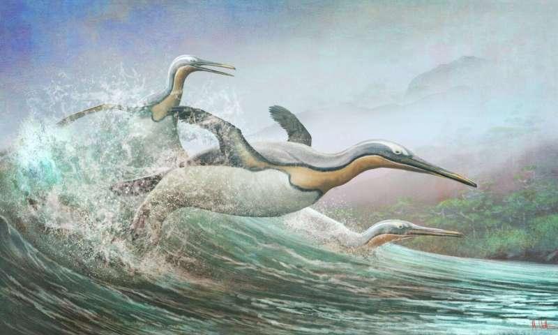 New Zealand's Ancient Monster Penguins had Northern Hemisphere Doppelgangers